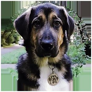 Адресник для собаки сделаный на заказ