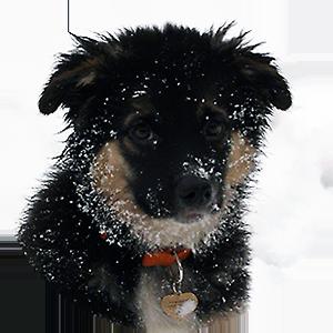 Адресник для щенка фото