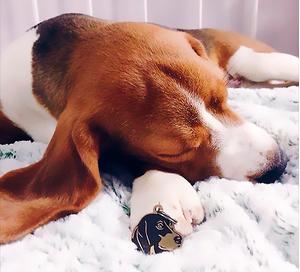 Медальон с гравировкой для собак породы Бигль