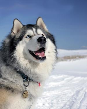 Адресный жетон для собаки