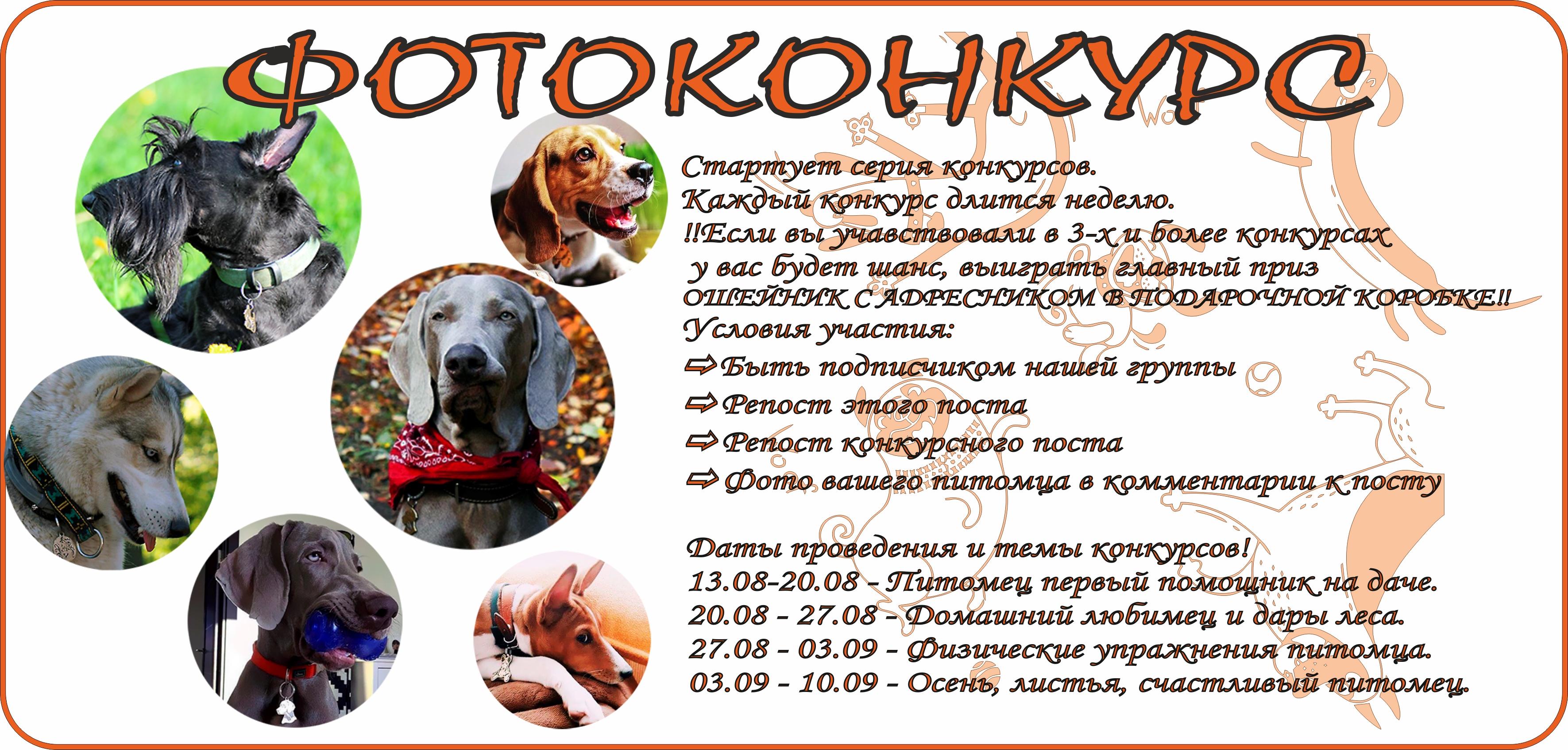 Фотоконкурс для собак