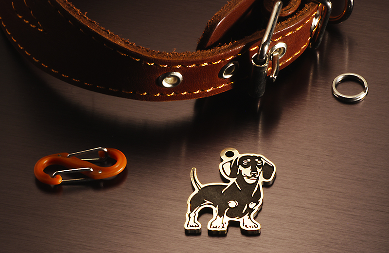 Tag for dogs breed Dachshund