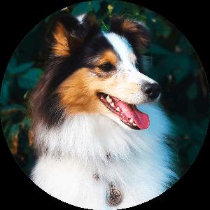 адресник и собака