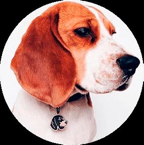 Зачем собаке адресник или история вторая