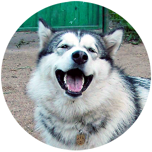 Фото жетона для собаки