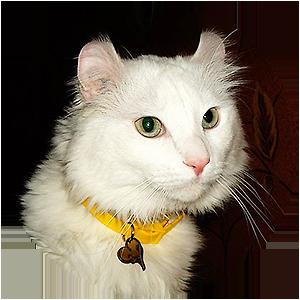 Фото адресника для котика