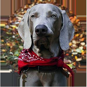 Фотография адресника для собаки