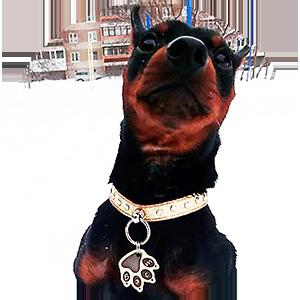 Фото адресника Лапа на собаке