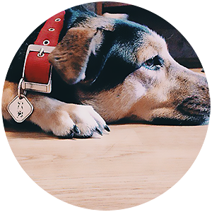 Собака с жетоном фотография