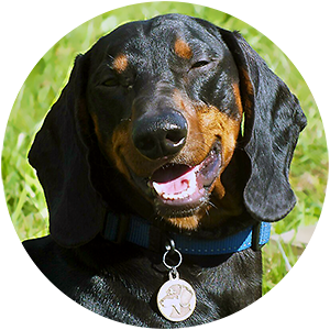 фото медальона с гравировкой для собак