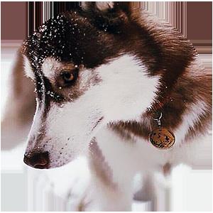Адресник на собаке фото