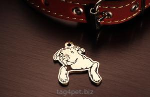 Tag for dog American bulldog