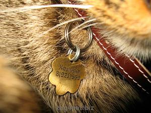 Адресник с гравировкой для кота