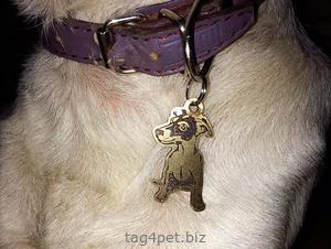 Адресник с изображением собаки Джек Рассел терьер