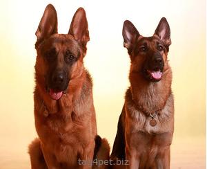 Жетон для собаки с гравировкой