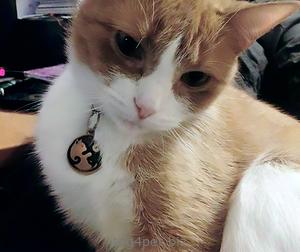 кошка с жетоном