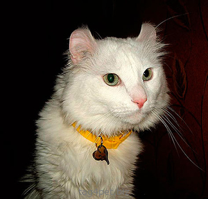 Адренсик для кошки