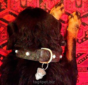 Адресник с изображением собаки породы Ротвейлер