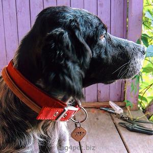 Фото жетона для собак