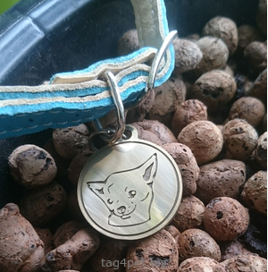 Tag for dog breeds Toy terrier