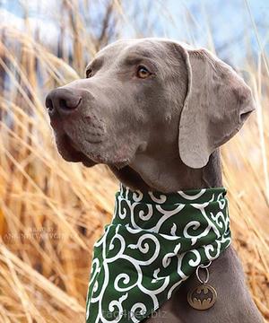 Адресник для собаки