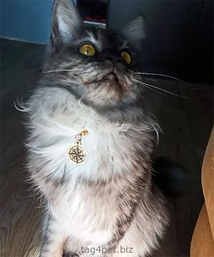 Медальон для котов и кошек