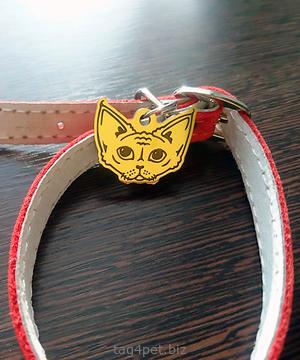 Cat tag Devon Rex