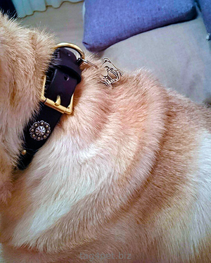 Фото брелка для собаки породы Шарпей