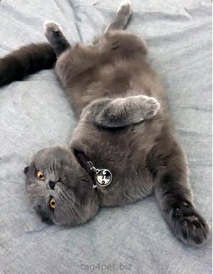 Жетон для котика с гравировкой