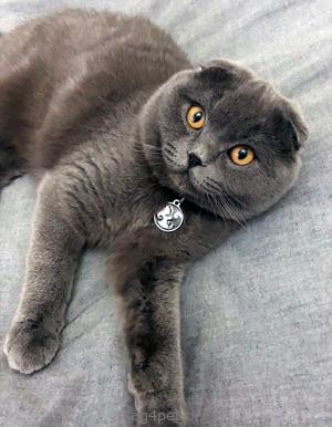 Адресник для котов и кошек
