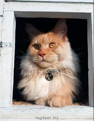 Адресник с гравировкой для котиков