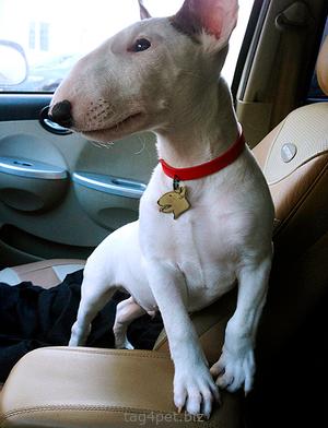 Фото медальона для собак породы Бультерьер